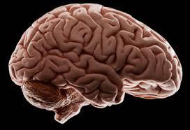 NEUROMETRÍA MIDE ACTIVIDAD CLINICA NEUROMETRICS